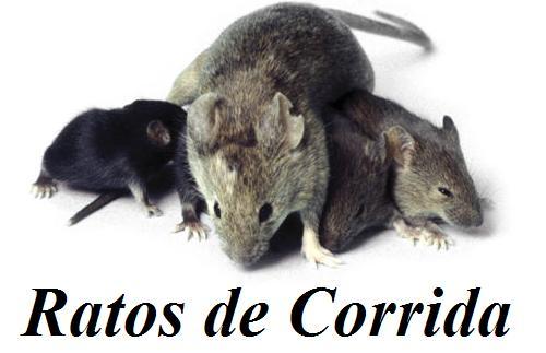 Ratos de Corrida