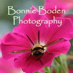 bonnie boden photography