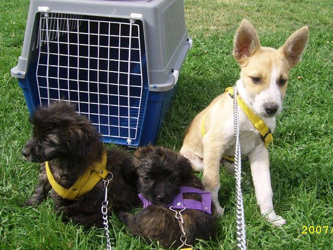 Cachorritos en la Kaninata
