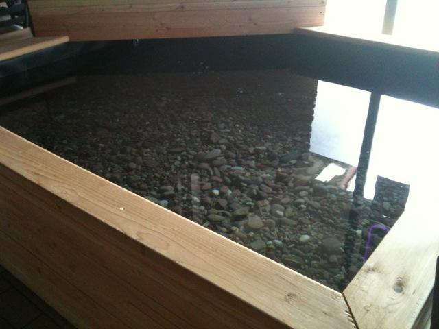 Pj cab the koi pond returns for Indoor koi fish pond