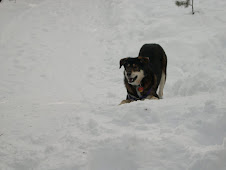 Shasta Loves Snow!