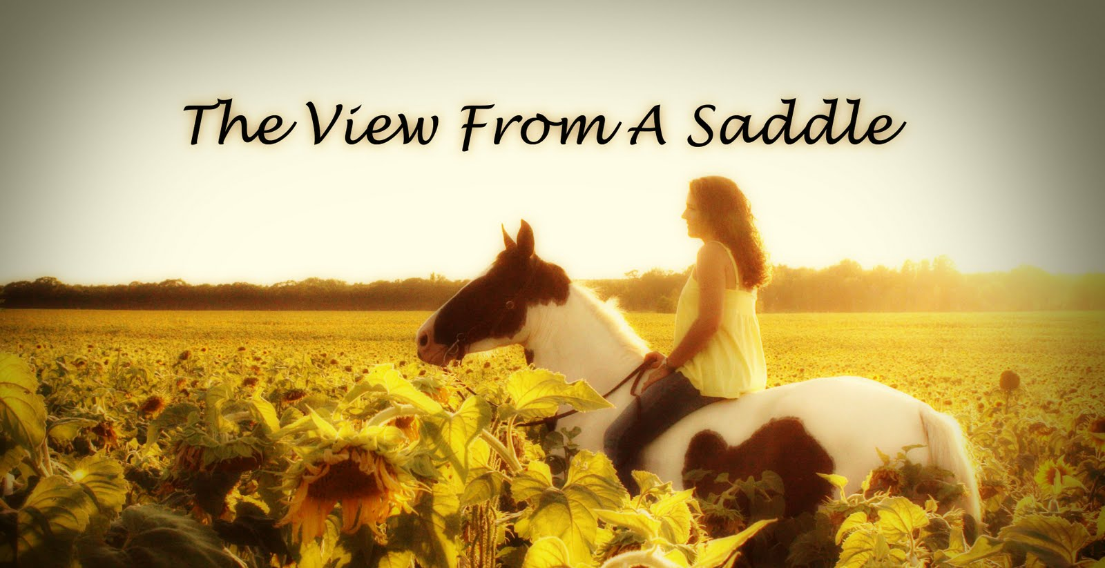 The View From A Saddle
