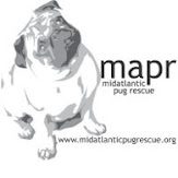The rescue I support with all my heart. This is where my 4 rescue pugs came from. Check it out now!
