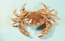 Picture of a crab