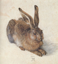 Durer Rabbit
