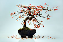 Bonsai Fall