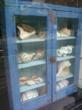 Shells Cabinet