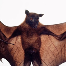 Outstretched fruit bat