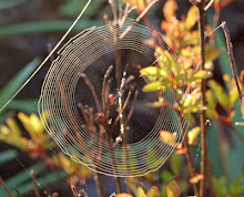 Round Spiderweb