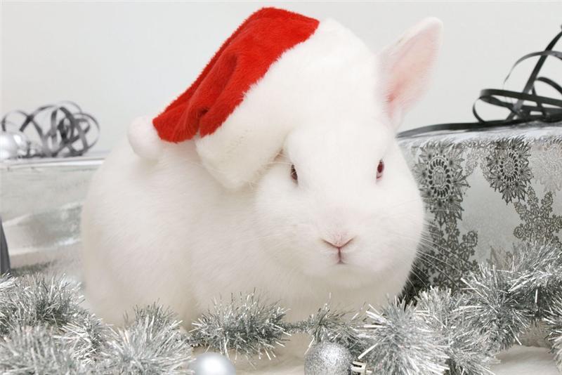 гороскоп на 2011 телец заяц кролик кот