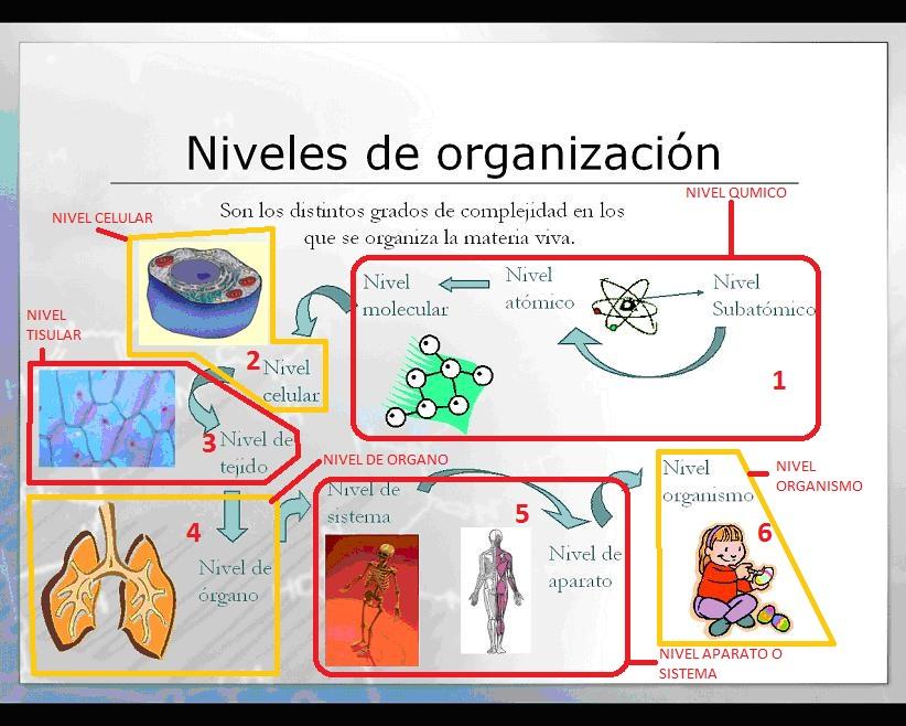 Anatomia: 4.-Niveles de Organización Biológica
