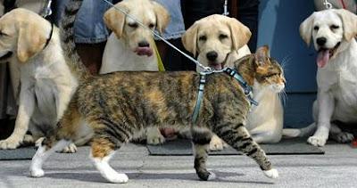 4 stupid dogs