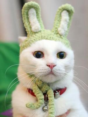 http://3.bp.blogspot.com/_ez9UzAGPSPU/Rhv0hLgdEXI/AAAAAAAAACo/IJrba0dnprs/s400/funny-cat.jpg