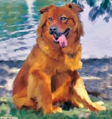 Jack Chow/Shepherd, New Orleans rescue dog
