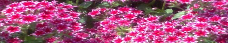 फूलों से भरा दामन : शेर-ओ-शायरी