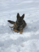 Zada in the Snow with a Tree Branch, i.e., Her Version of a Stick
