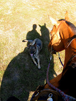 Dog, Horse & Silhouette of Rider