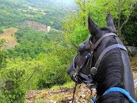 Maremman Horse in Tuscany