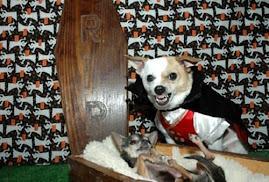 Vampiros existem!!