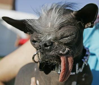 Elwood, el perro más feo del mundo