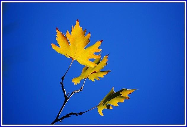116- Mevsim sonbahar