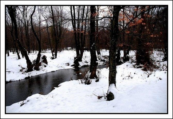 174 - Karlı Kayın Ormanında...