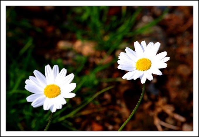 184 - Dün...Bahçemden...