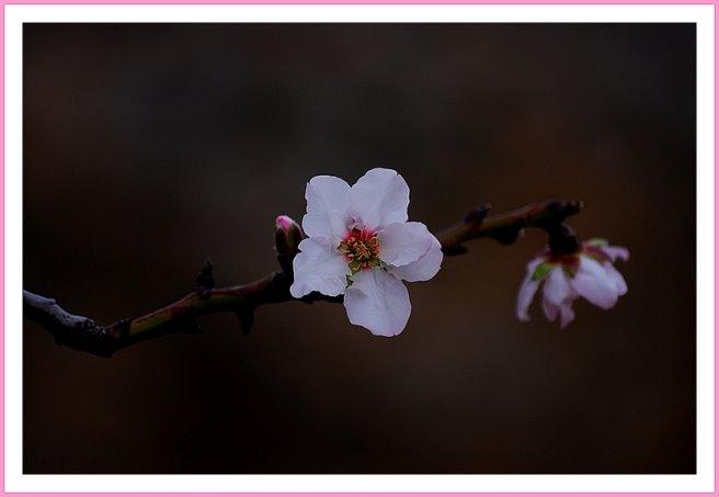 191 - Bahar dalı
