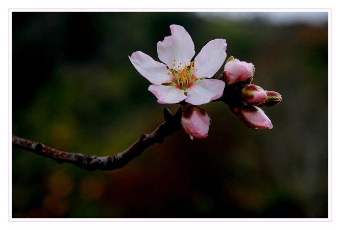 202 - Bir bahar dalı daha...