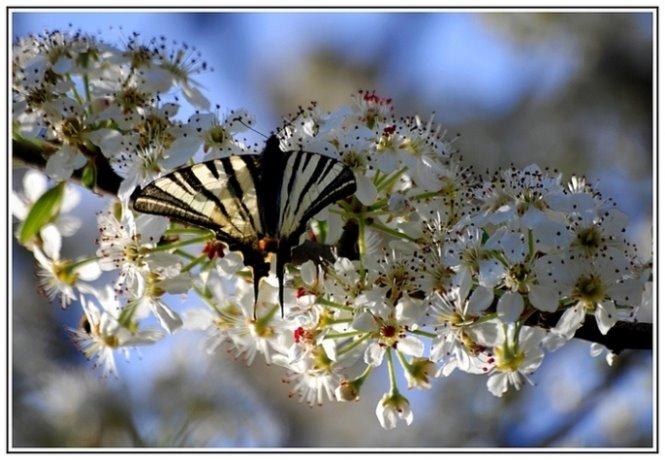 218 - İki Bahar güzeli...