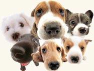 """""""100 Cães que mudaram o mundo"""""""