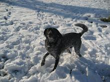 Bosco in the snow