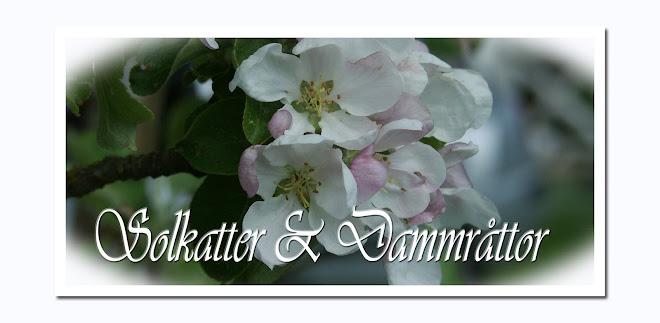 Solkatter & Dammråttor