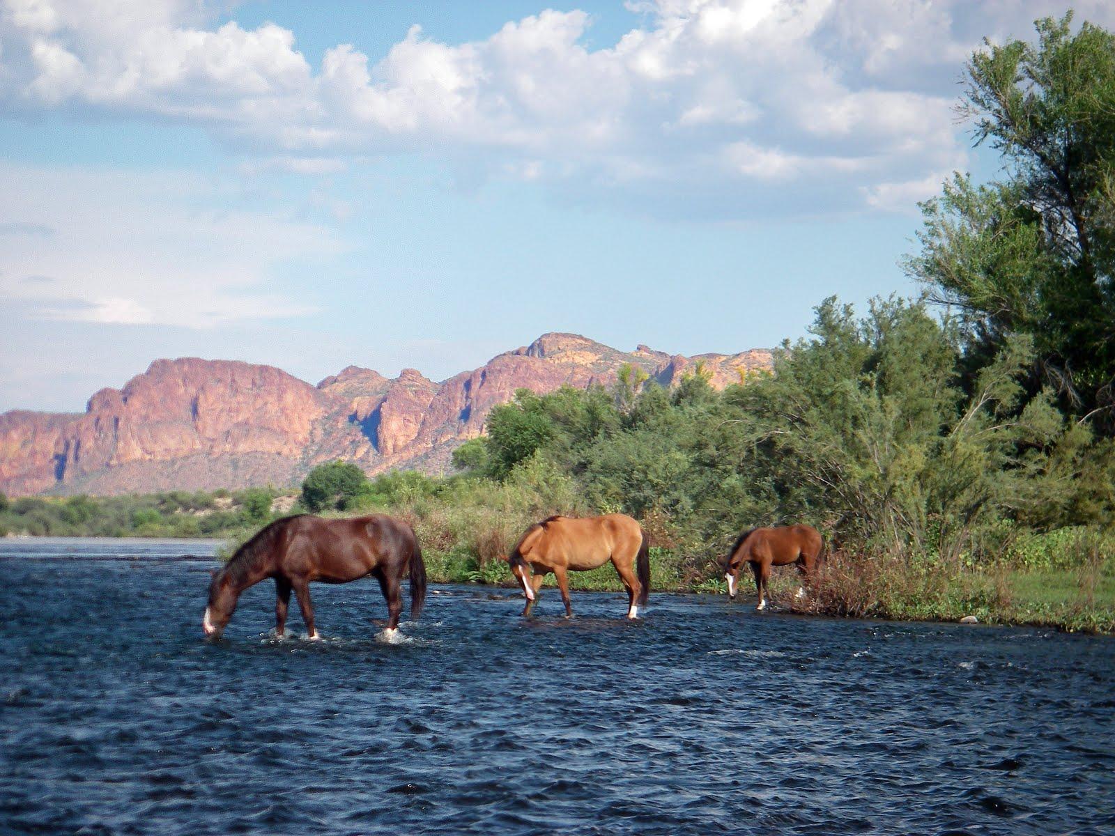 Wild Horses of Arizona *Wild Horse RP* - members