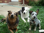 Dingo, Alfie, Violet