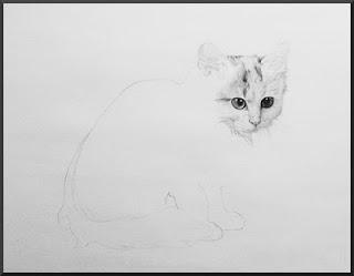 Drawing of Turkish Van Kitten
