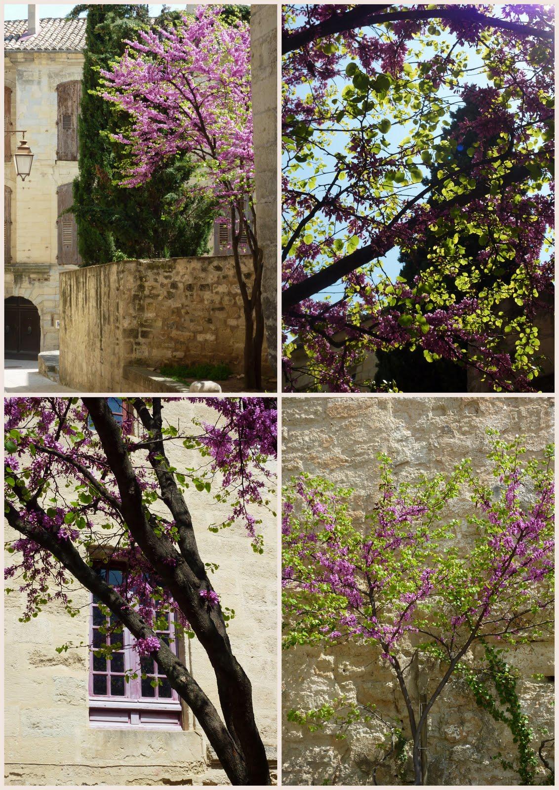 arbre de judé