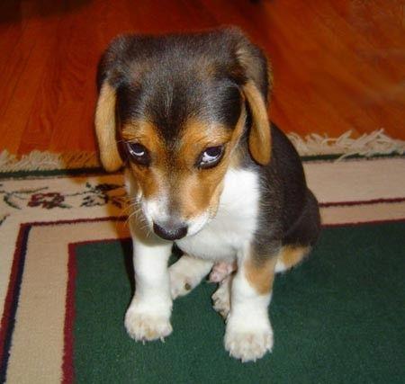Schedule Ashamed-puppy