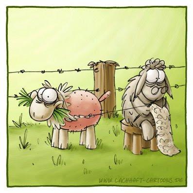 Schafe Wolle stricken nackt ausziehen ausgezogen peinlich Faden Oma Gras fressen Cartoon Cartoons Witze witzig witzige lustige Bildwitze Bilderwitze Comic Zeichnungen lustig Karikatur Karikaturen Illustrationen Michael Mantel lachhaft Spaß Humor