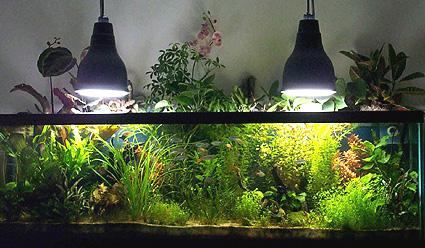 Easyacuario diciembre 2010 for Peceras de jardin