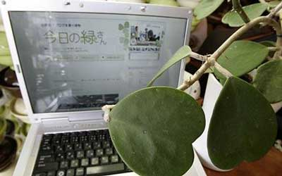 [blogging+plant.jpg]
