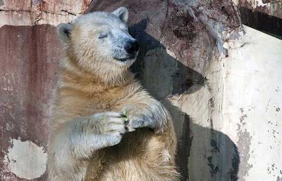http://3.bp.blogspot.com/_f98opUNuVXc/TLx4967JAMI/AAAAAAAATNg/TCIH-ChY2TE/s400/Polar+bear.jpg