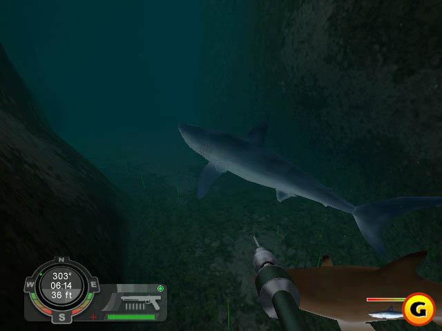 Shark Games - Y8.COM