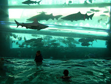 Tyler and Abby swimming with the sharks