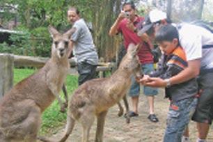 daftar tempat wisata bali on Tempat Wisata Di Bogor . ANDA bisa melihat tingkah laku berbagai jenis ...