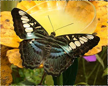 Mariposas.Página francesa. Hermosísima