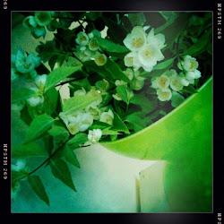 Bilderna på Bloggen