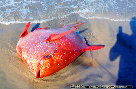 Most bizarre fish stories