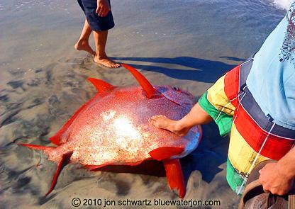 Jon schwartz 39 s blog fishing big fish photography and for Hawaiian moon fish