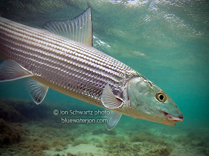 how to catch bonefish hawaii